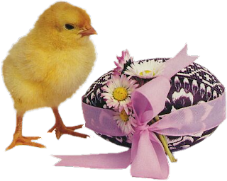 cesto y pollito