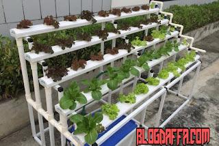 Cara menanam hidroponik di pekarangan rumah
