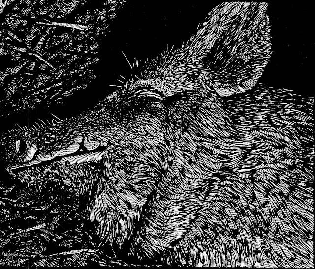 Barry Moser profile of a hog