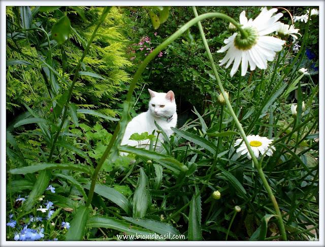 white cat, beautiful cat in the garden, garden, cat