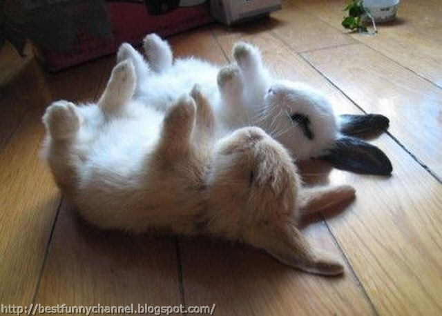 Two funny bunny.