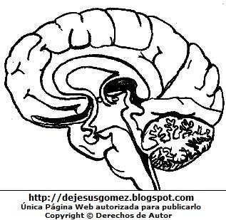 Dibujos Fotos Acrostico Y Mas Dibujos Del Cerebro Para