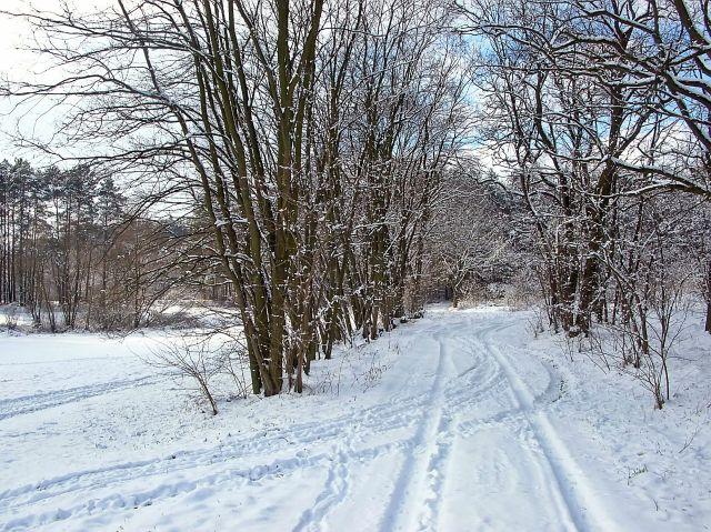 zima, śnieg, biało, las