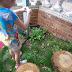 A new fairy garden