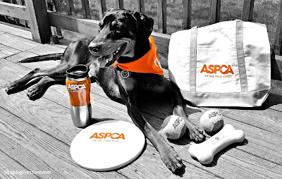 Help Penny Wish the ASPCA a Happy 150th - and enter to WIN a #ASPCA150 Gift Pack! #adoptdontshop #rescuedog #LapdogCreations ©LapdogCreations