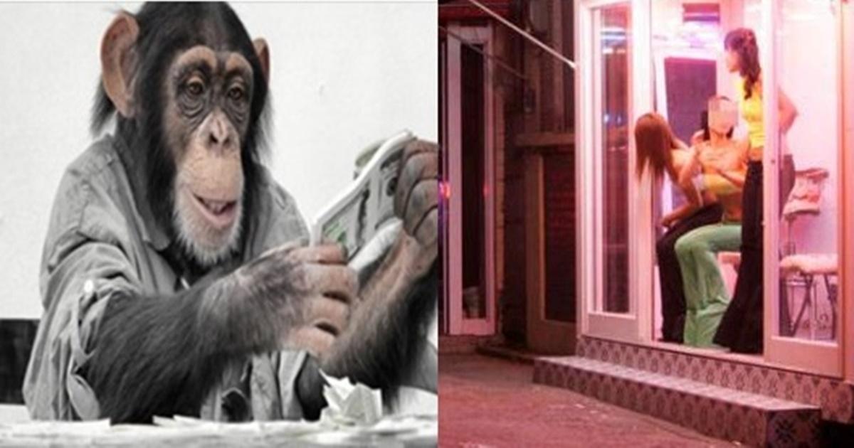 원숭이들에게 돈의 개념을 학습 시켰더니 생긴 충격적인 일