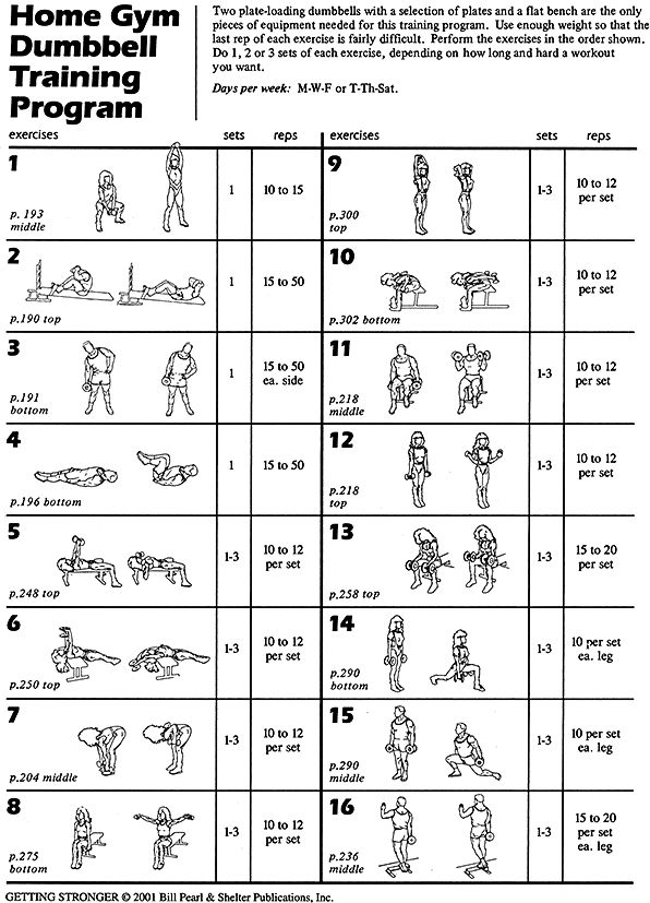 whole body workout routine using dumbbell and bench exercise