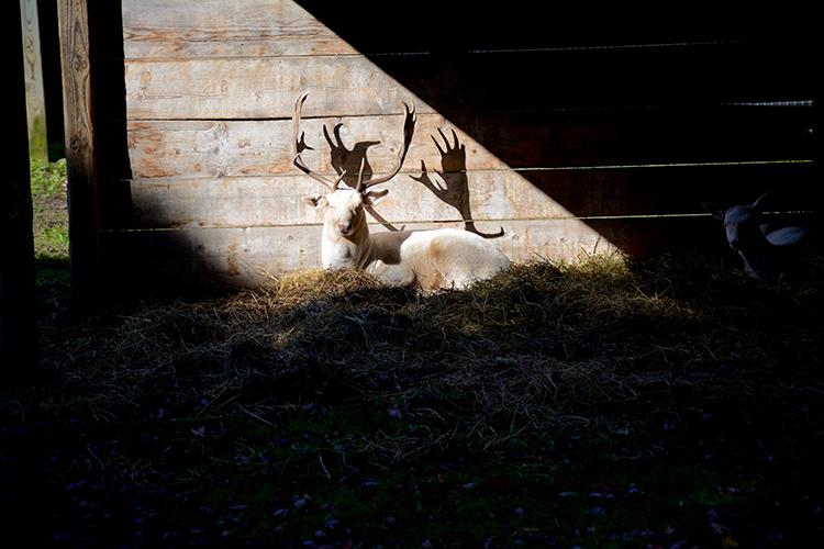 Wisconsin Deer Park, Wisconsin Dells | My Darling Days