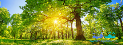 صور مناظر طبيعيه عن الخضرة