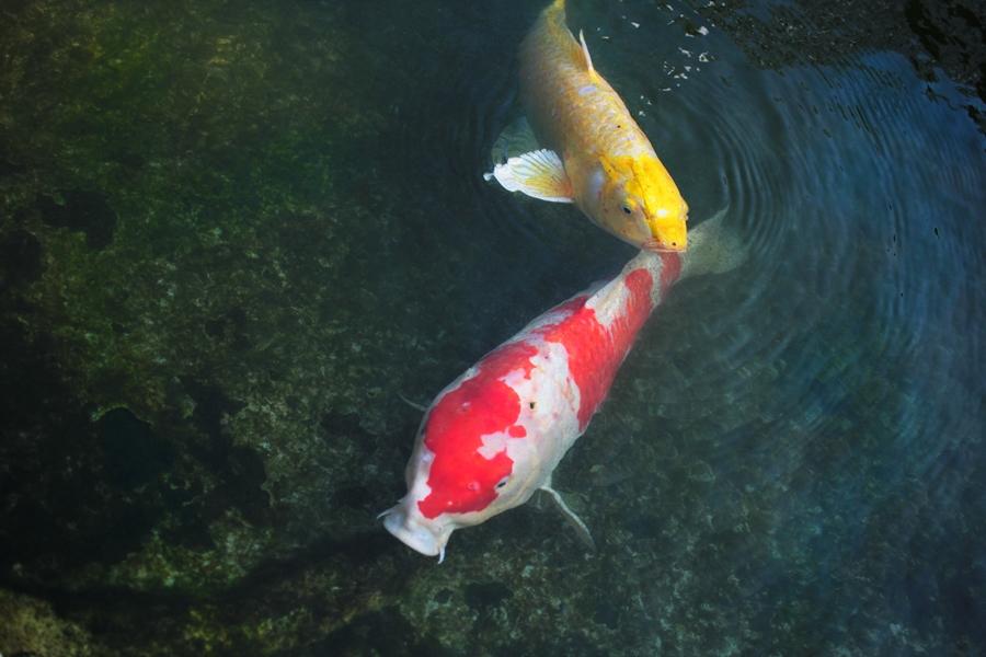 fisch teich natur