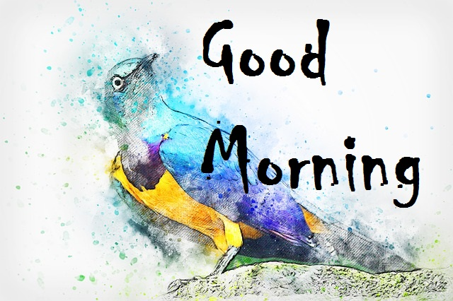 Good Morning Bird