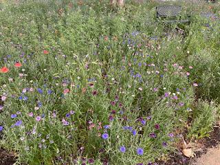 Wildflower Front Yard