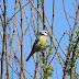 A madáretetést tavasszal is érdemes folytatni, hívja fel a figyelmet a MME