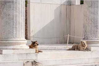 εκπαίδευση Αθηναϊκών σκύλων