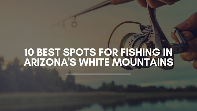10 Best Spots for Fishing in Arizona's White Mountains