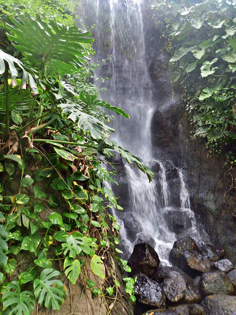 Waterfall in the Rainforest Biome at the Eden Project, Cornwall