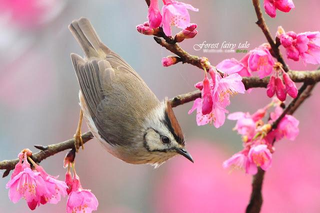 Thơ tình mùa xuân, những chùm thơ ngắn hay về mùa xuân