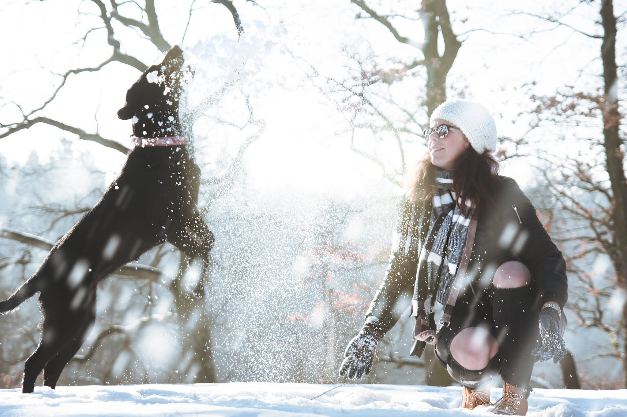 Snow With Your Dog