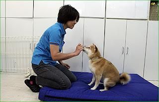 treinamento de obediência com cães