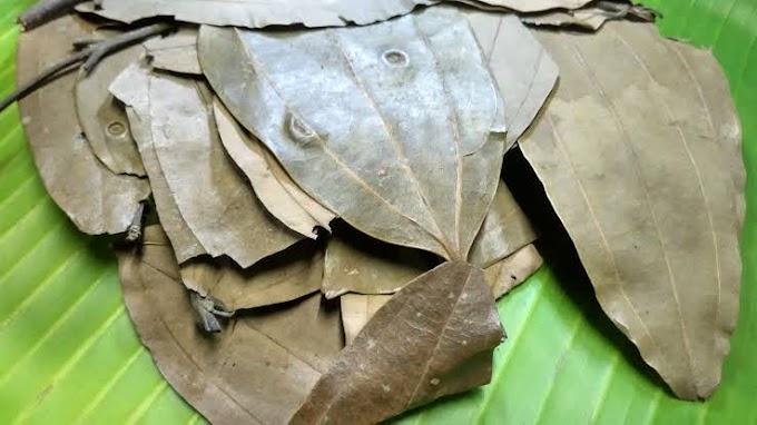 பிரியாணி இலை நன்மைகள் | Bay leaf in tamil