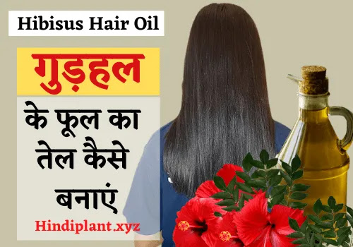 गुड़हल के फूल का तेल कैसे बनाएं। How To Make Hibisus Hair Oil In HIndi.