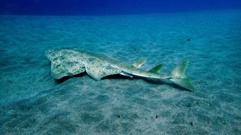 Πρώτη Διεθνής Ημέρα Αγγελοκαρχαρία
