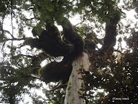 Moss-covered branches - Mount Taranaki trail, New Zealand