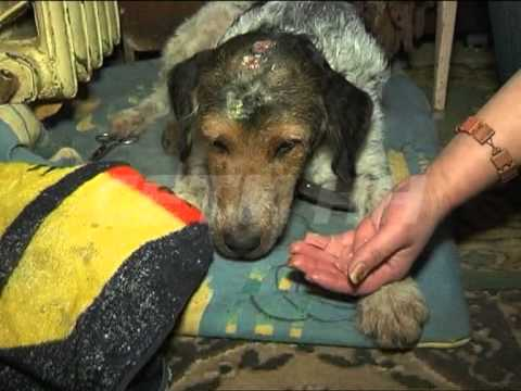 Попытался изнасиловать собаку и пробил ей голову. Жестокая история из Красноярска