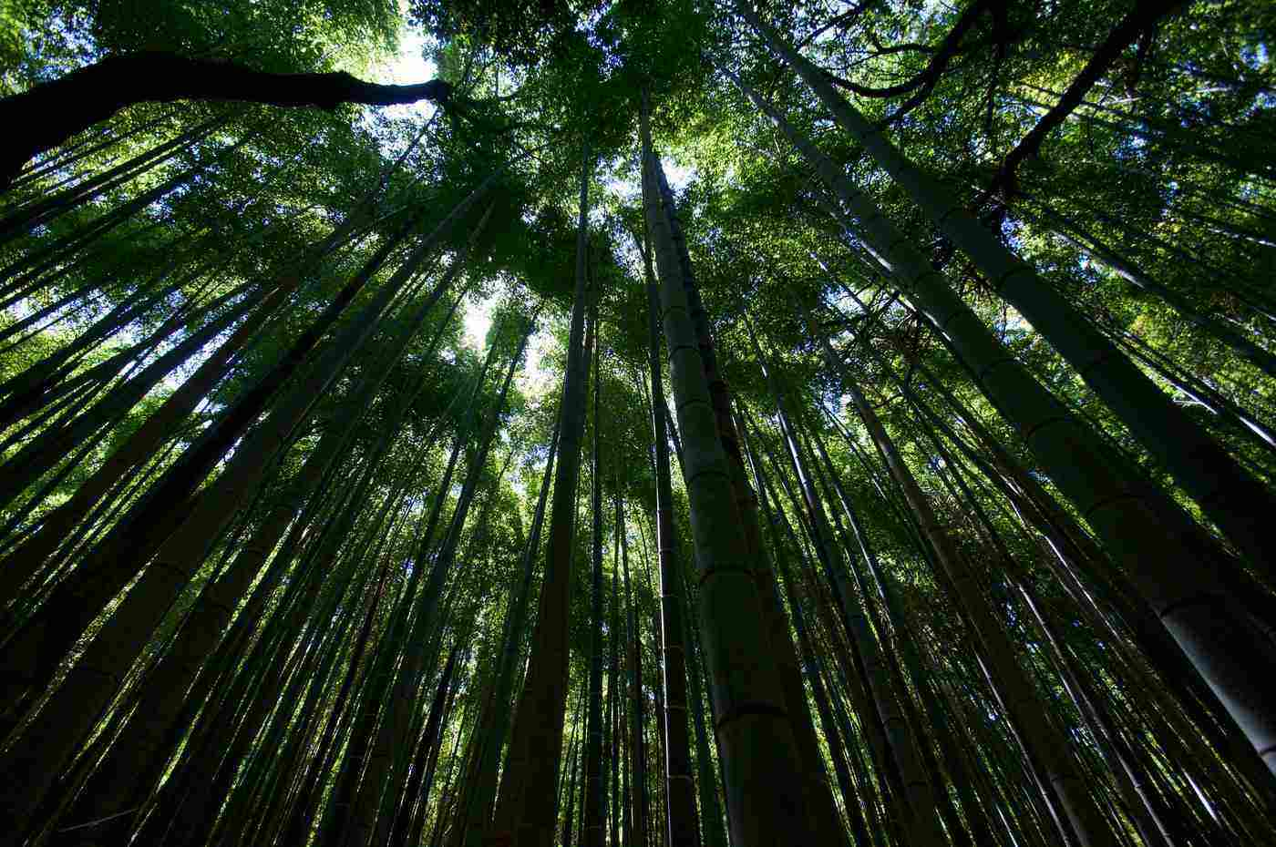 arashiyama bamboo grove - 15 most beautiful places on earth
