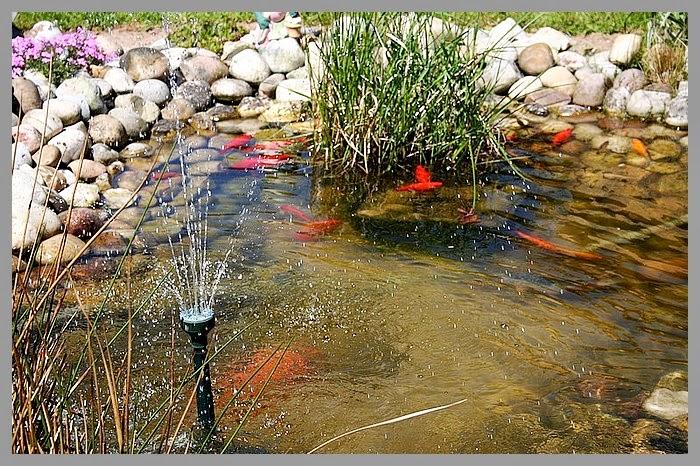 Aux Jardins D\'Amélie: Le bassin aux poissons, l\'endroit \