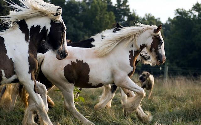 Twee wit bruine paarden