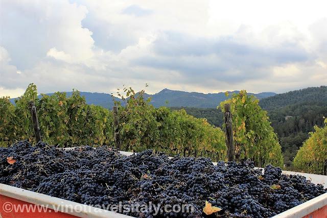 wine tasting in Chianti Classico