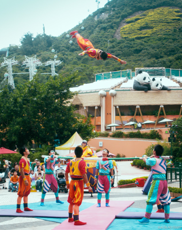Things to Do in Ocean Park, Hong Kong