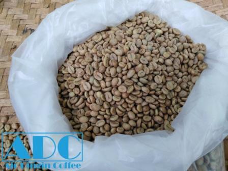 Green bean robusta premium lampung