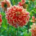 Cara Mudah Menanam Bibit Bunga Di Taman Dari Benih