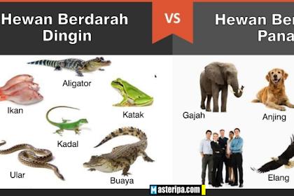 Perbedaan Antara Hewan Berdarah Dingin dan Hewan Berdarah Panas