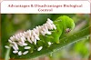 Advantages & Disadvantages of Biological Control