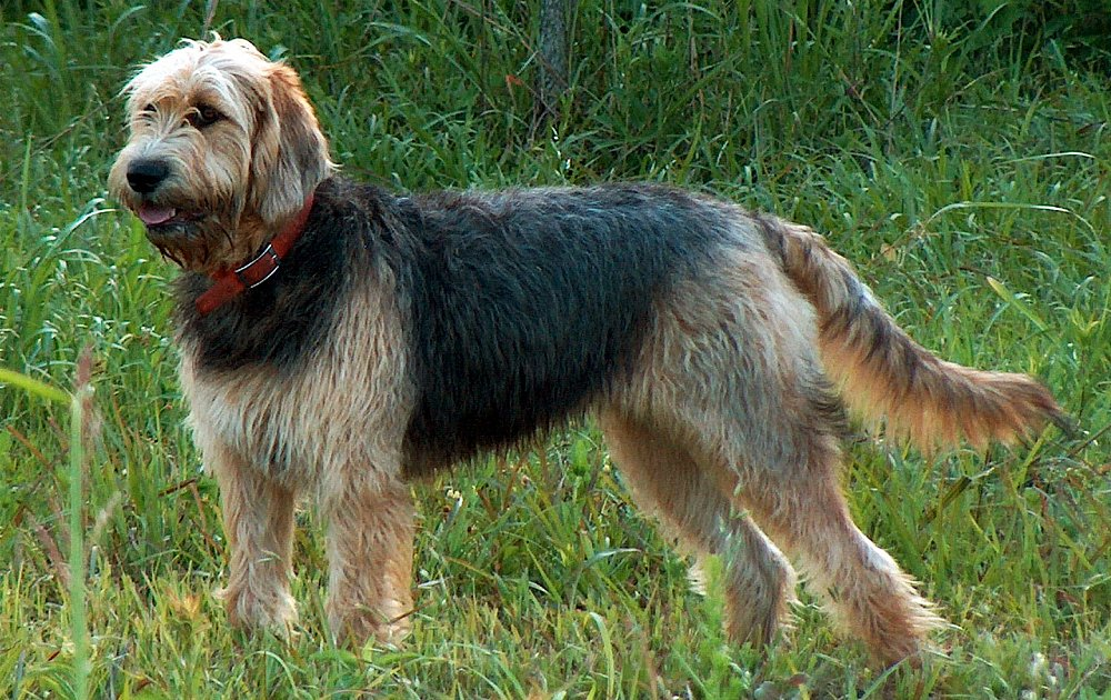 outterhound dog breed image
