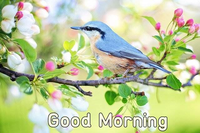 good morning birds flowers