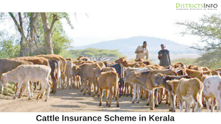 Cattle Insurance Scheme in Kerala