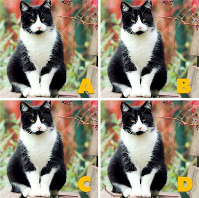 Which image is different? image 21