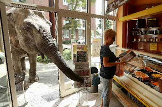 Elephant shopper