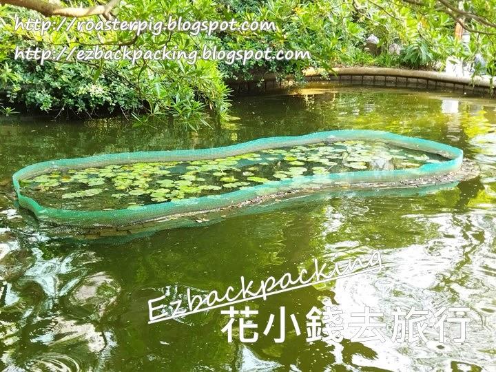 九龍公園睡蓮池