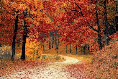 https://pixabay.com/pl/upadek-jesie%C5%84-czerwony-sezon-lasy-1072821/