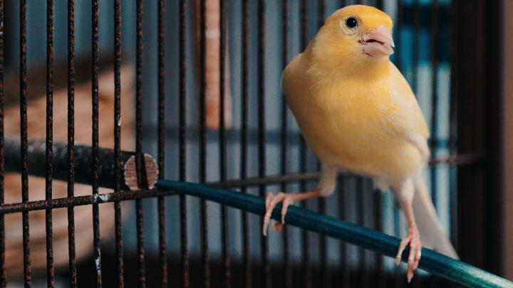 bird diseases