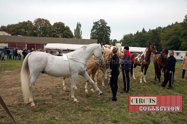 chevaux en coulisses