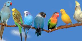 Top 5 meilleurs endroits pour observation d'oiseaux