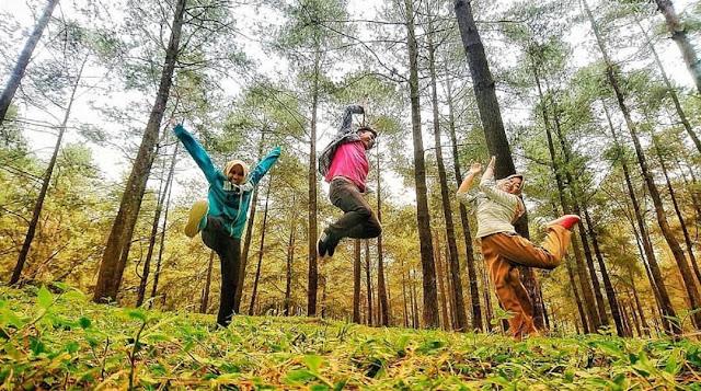 Hutan Pinus Limpakuwus Banyumas - Tiket Masuk dan Lokasi