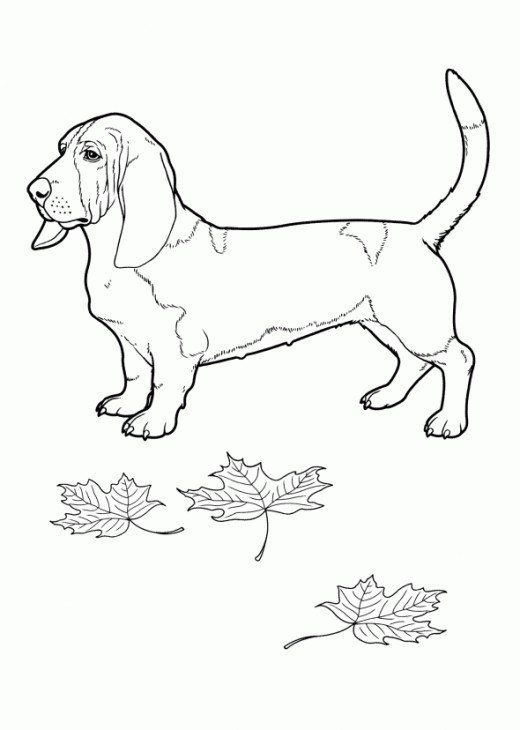 Hình tô màu con chó