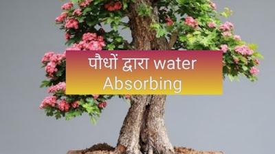पौधों में जल अवशोषण